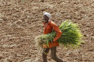 Farmers Reuters 1