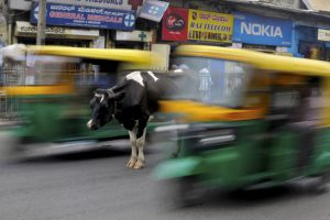 Cow Road Reuters