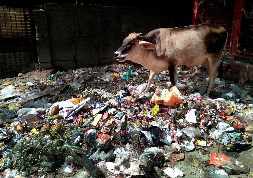 New Delhi: Cows foraging through garbage for food, in East Delhi on Friday. Delhi High Court on Friday issued show cause notice to the Commissioners of East, North and South Municipal Corporations on lack of cleanliness. PTI Photo by Manvender Vashist (PTI6_2_2017_000198B)