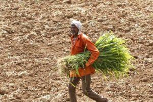 Farmers-Reuters-1-1024x709 (1)