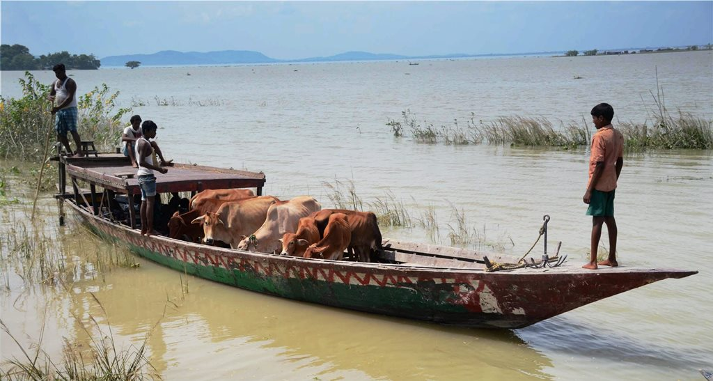Morigaon: Villagers along with their cattle commute by a boat at a flood-hit village in Morigaon district of Assam on Thursday. PTI Photo (PTI8 17 2017 000157A)