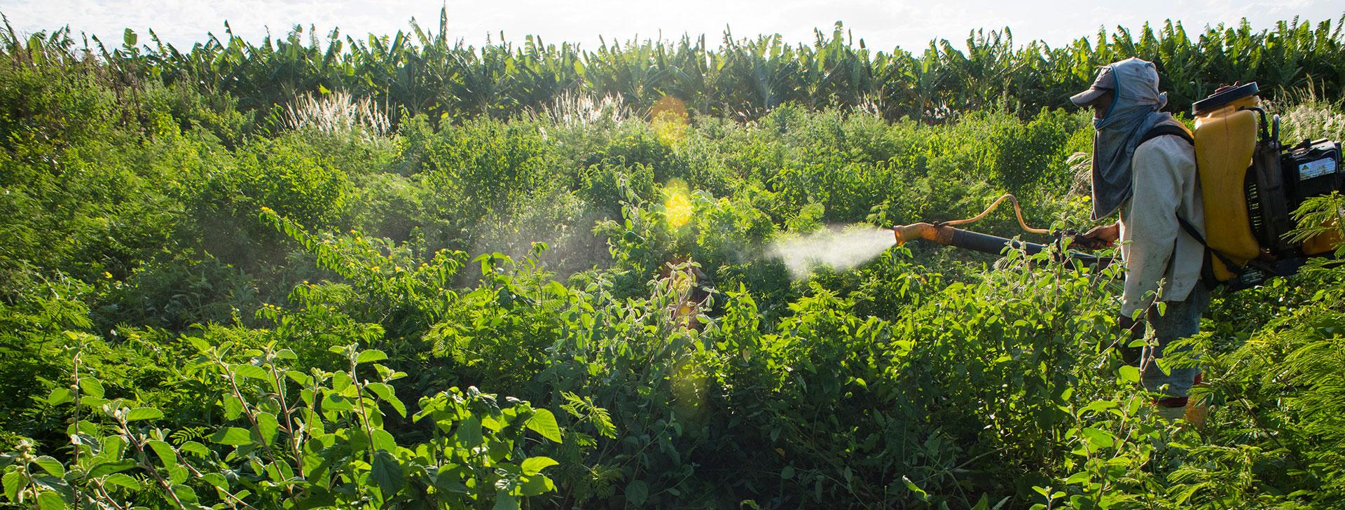 Farmer Pesticide Reuters