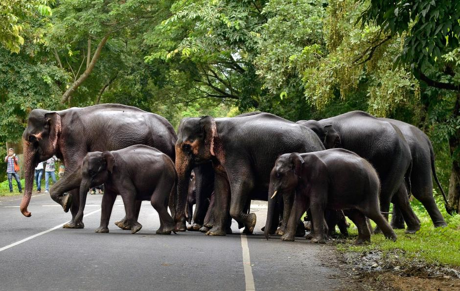 A herd of elephants cross a road that passes through the flooded Kaziranga National Park in the northeastern state of Assam, India, July 12, 2017. Picture taken July 12, 2017. REUTERS/Anuwar Hazarika
