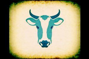 COW Final