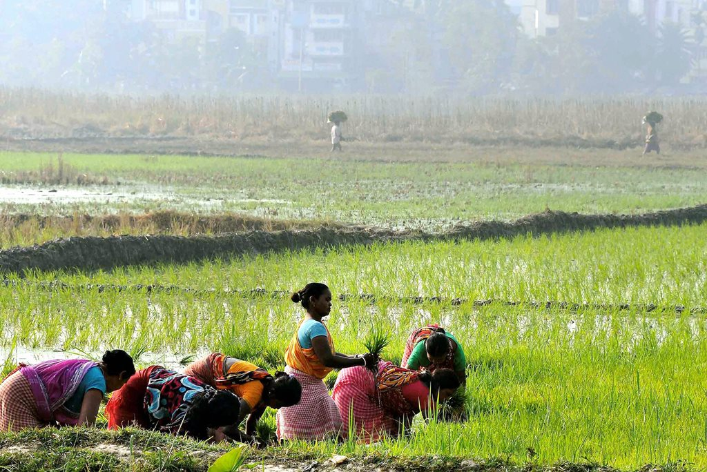 Kolkata: Farmers plant paddy saplings in a field as the Boro paddy season starts, in the outskirts of Kolkata on Monday morning. PTI Photo (PTI1_29_2018_000045B)