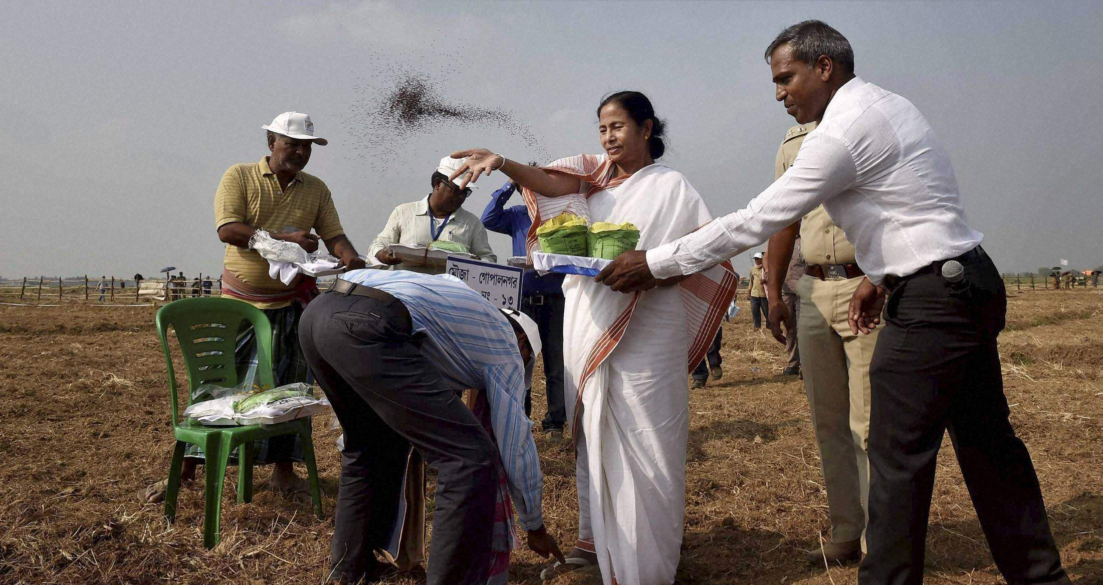West Bengal Chief Minister Mamata Banerjee sowing master seeds with farmers at the land handed over to the farmers, in Singur. | PTI File Photo