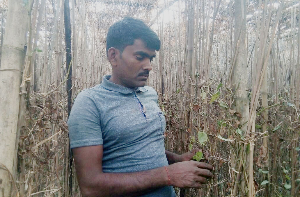 Betel Leaf Farmers The Wire