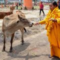 Allahabad: Union Minister for Drinking Water and Sanitation Uma Bharti feeds a cow in Allahabad on Thursday. PTI Photo (PTI5_3_2018_000175B)