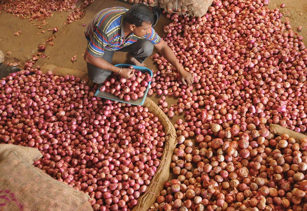 Chikmagalur: A vendor sorts onions at the Agricultural Produce Market Committee (APMC) market in Chikmagalur, Karnataka, Thursday, Sept. 26, 2019. Onion prices are soaring across the country. (PTI Photo) (PTI9_26_2019_000060B)