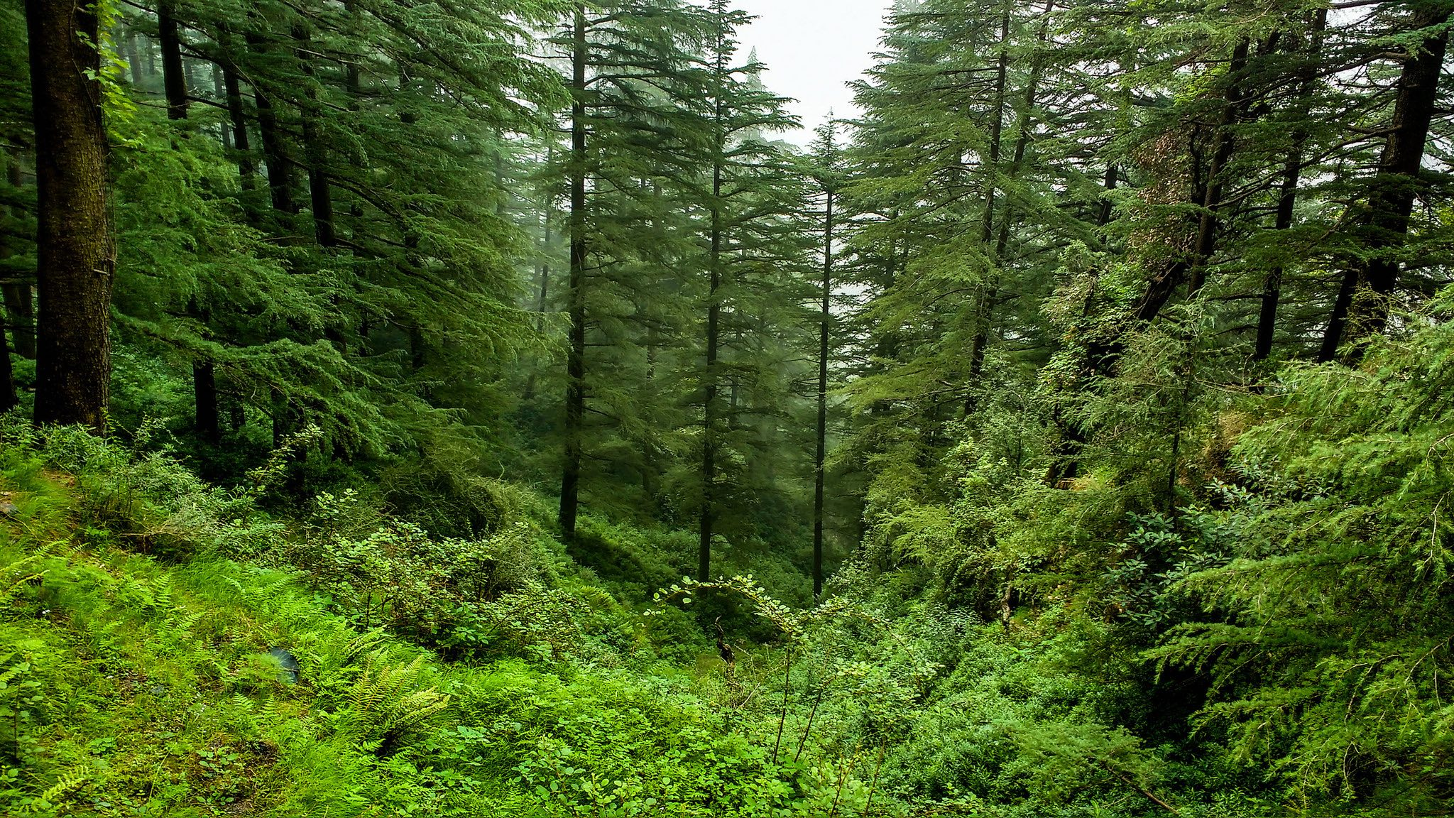 India-forest blackfog/Flickr, CC BY 2.0)
