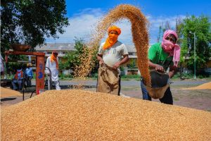 Amritsar: Labourers work on the newly arrived wheat grain at a wholesale grain market in Amritsar, Tuesday, April 21, 2020. The Punjab State Agricultural Marketing Board has set up special guidelines and made arrangements for the procurement of wheat crop during the nationwide COVID-19 lockdown. (PTI Photo)   (PTI21-04-2020_000167B)