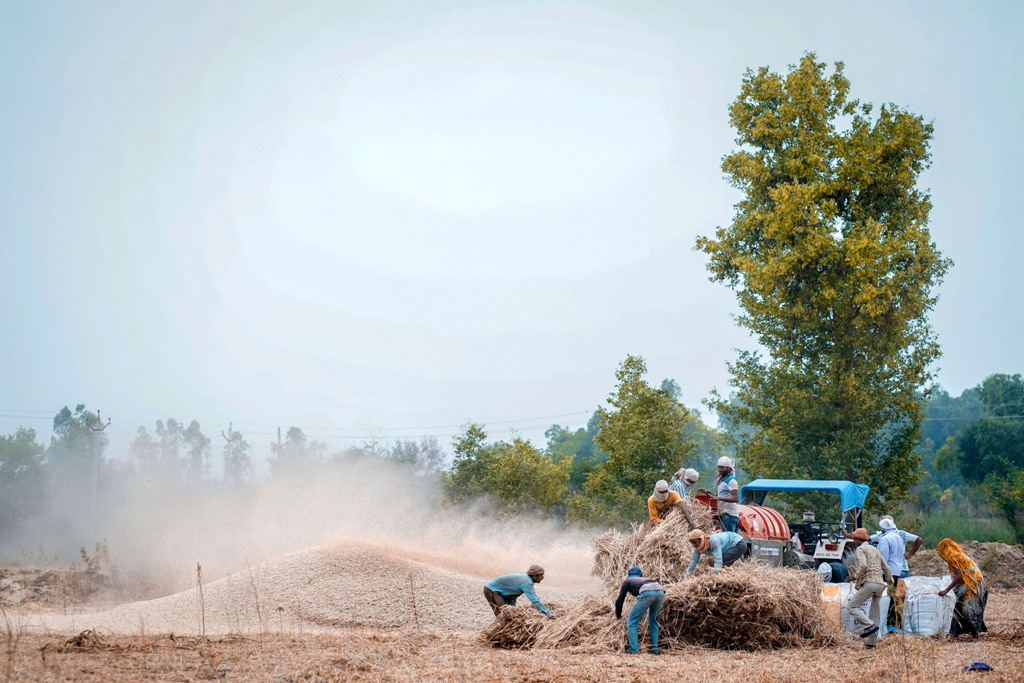 Raebareli: Farmers sort wheat crops after reaping, during the nationwide lockdown to curb the spread of coronavirus, on the outskirts of Raebareli, Thursday, April 23, 2020. (PTI Photo)(PTI23-04-2020_000206B)