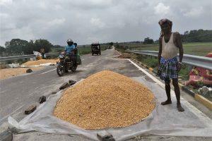 मक्का किसान। (फोटो: हेमंत पांडेय)