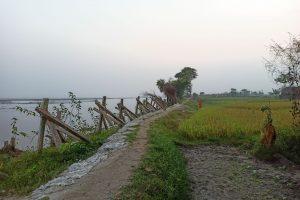कोसी की कटान रोकने के लिए लगाए गए पॉर्क्यूपाइन. (सभी फोटो: मनोज सिंह)