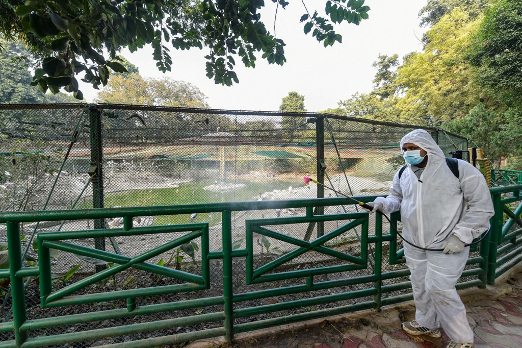 Lucknow: A worker wearing a protective suit sprays disinfectant inside Lucknow Zoo in the wake of Avian Influenza outbreak, in Lucknow, Saturday, Jan. 09, 2021. (PTI Photo/Nand Kumar)(PTI01 09 2021 000111B)