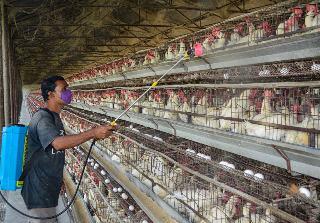 Karad: A worker sprays disinfectant inside a poultry farm as a precaution against bird flu, in Karad, Maharashtra, Tuesday, Jan. 12, 2021. (PTI Photo) (PTI01 12 2021 000063B)