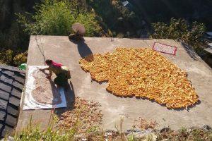 पहाड़ों में उत्पादन की अपनी अलग चुनौतियाँ हैं. (फोटो: मान्शी अशर)