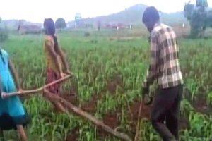 Madhya Pradesh Farmers 1 ANI