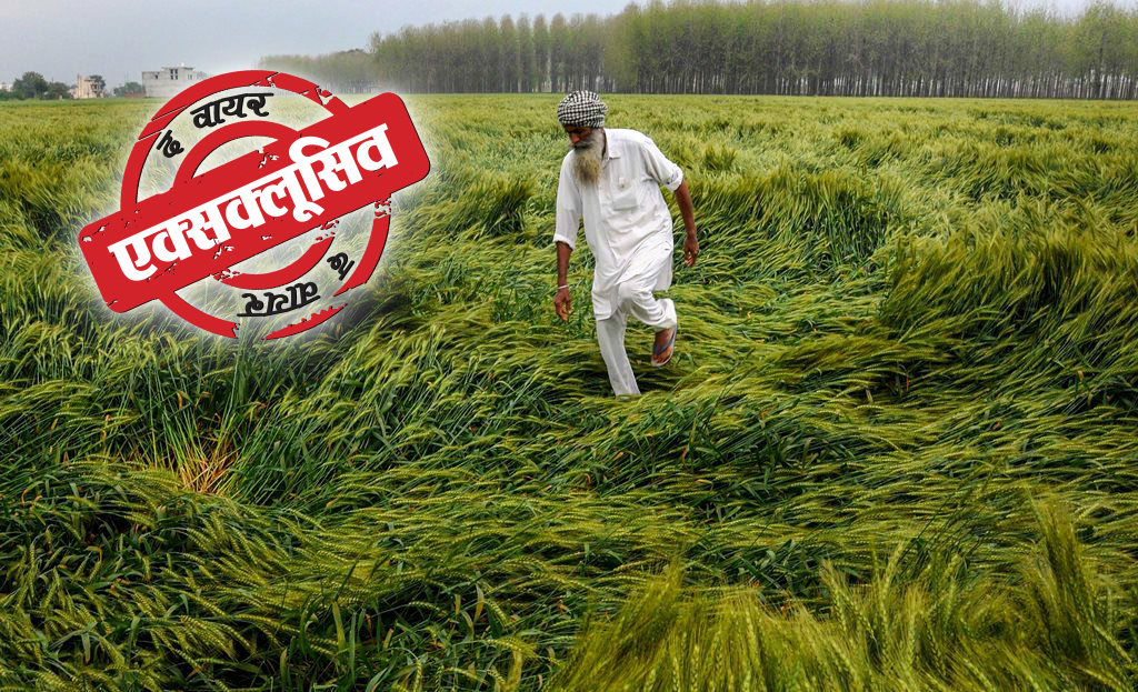 Amritsar: A farmer checks his field of wheat crop, that was damaged in heavy rain, on the outskirts of Amritsar on Wednesday.PTI Photo(PTI3_21_2018_000125B)