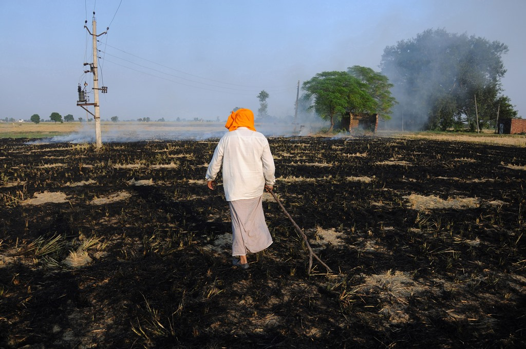 Amritsar: Farmers work in a field as smoke rises due to the burning of the paddy stubbles at a village on the outskirts of Amritsar, Friday, Oct 12, 2018. Farmers are burning paddy stubble despite a ban, before growing the next crop. (PTI Photo) (PTI10_12_2018_1000107B)