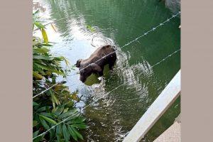 Kerala Elephant FB