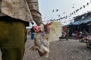 New Delhi: A man carries chicken at Ghazipur Murga Mandi, in New Delhi, Saturday, Jan. 9, 2021. The poultry market in Delhi will remain closed for 10 days due to the outbreak of avian influenza, commonly known as bird flu, in several parts of the country. (PTI Photo/Arun Sharma) (PTI01 09 2021 000108B)