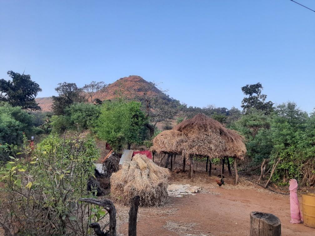 टाटा की ज़मीन पर एक गांव में हुई खेती.
