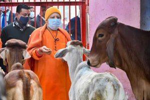 मुख्यमंत्री योगी आदित्यनाथ. (फाइल फोटो: पीटीआई)